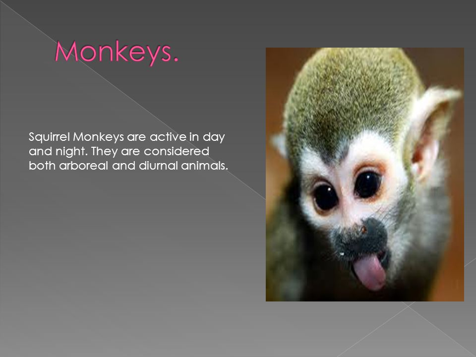 Squirrel Monkeys are active in day and night.
