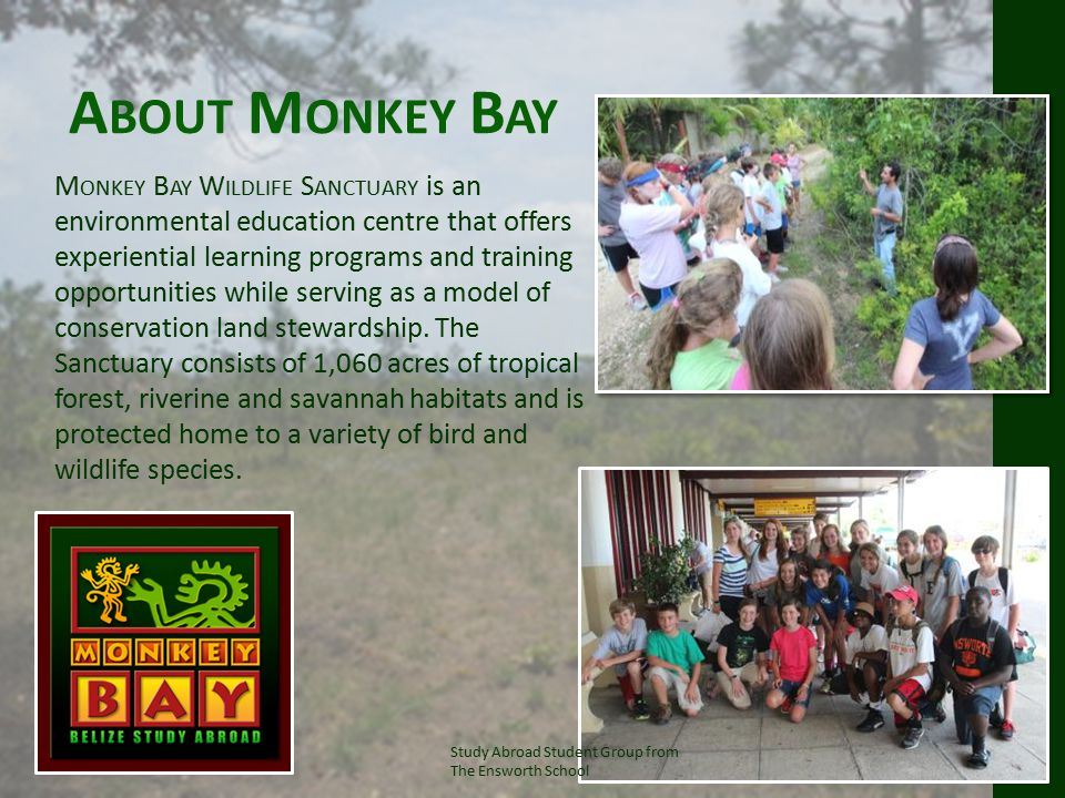 A BOUT M ONKEY B AY M ONKEY B AY W ILDLIFE S ANCTUARY is an environmental education centre that offers experiential learning programs and training opportunities while serving as a model of conservation land stewardship.