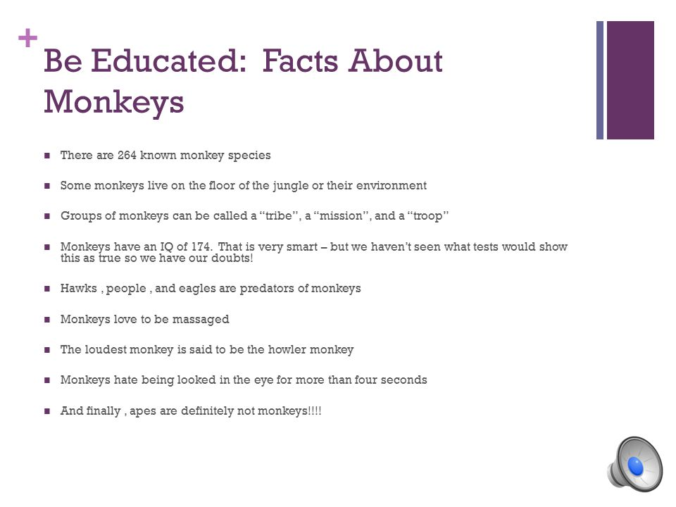 + Monkeys: The Real Stuff By: Madyson Hunter And Ahmad Azmi