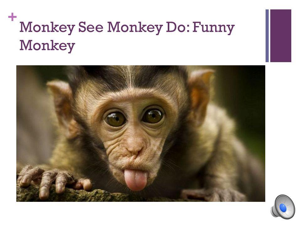 + Monkey See Monkey Do: Funny Monkey