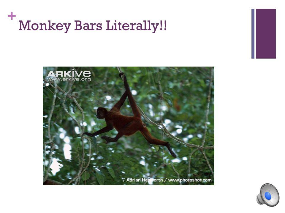 + Monkey Bars Literally!!