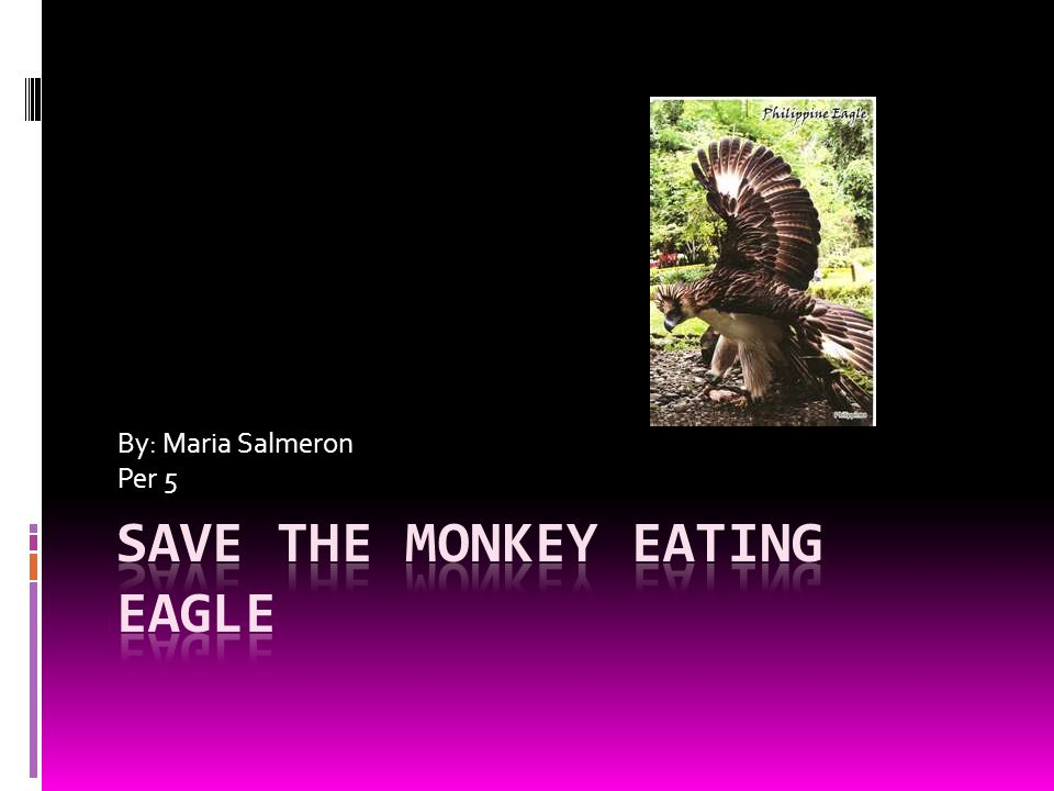 Monkey Eating Eagle  This bird is one of the most fast & powerful birds.