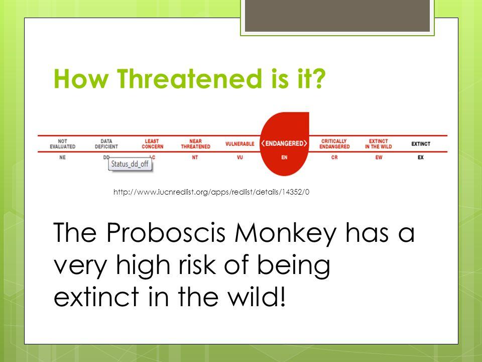 How Threatened is it? http://www.iucnredlist.org/apps/redlist/details/14352/0 The Proboscis Monkey has a very high risk of being extinct in the wild!