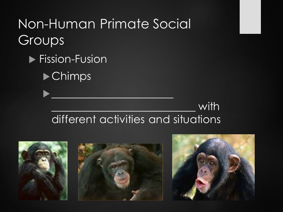 Non-Human Primate Social Groups  Fission-Fusion  Chimps  ______________________ __________________________ with different activities and situations