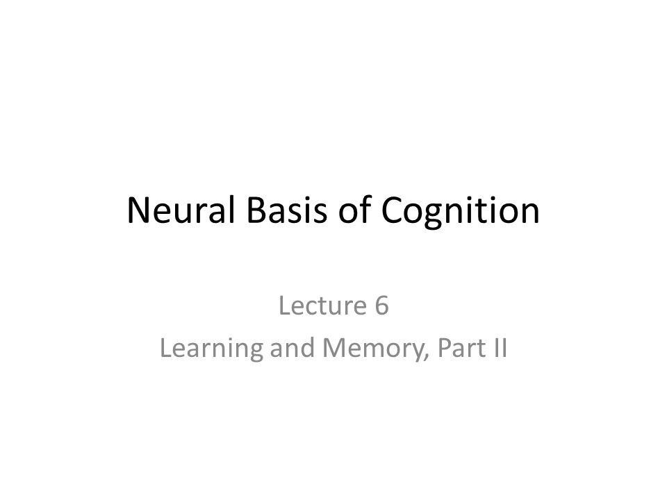 Prefrontal Cortex (PFC) Other regions of the PFC activate during memory retrieval Patients with PFC damage tend to confabulate (generate narratives that include false memories) and an increased number of false positives in recognition-memory tasks – This implies that the PFC is involved in organizing and monitoring memory retrieval PFC activation during memory retrieval is lateralized