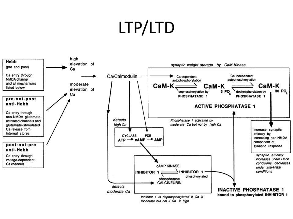 LTP/LTD