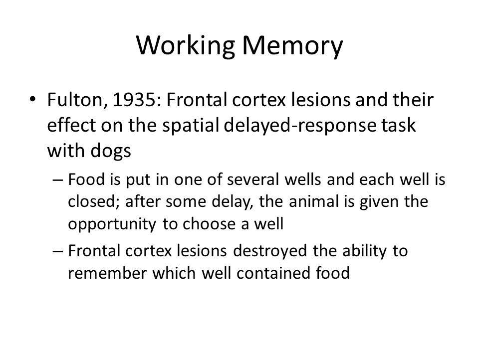 Working memory Dorsolateral prefrontal cortex (DLPFC)