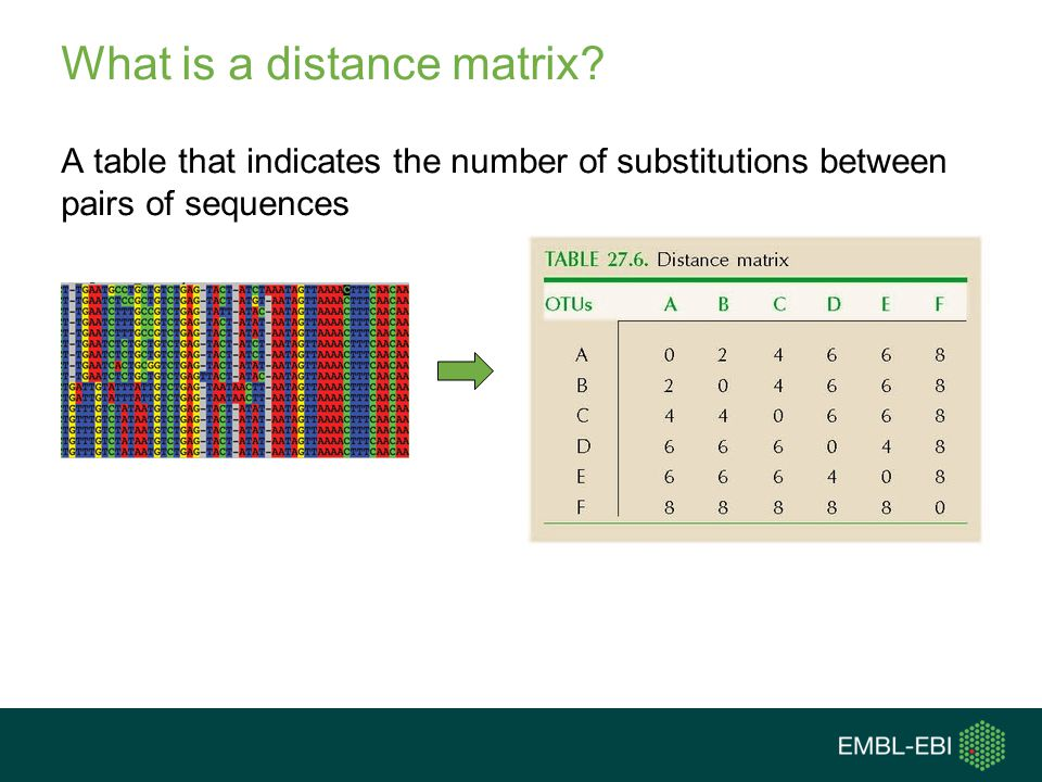 What is a distance matrix? A table that indicates the number of substitutions between pairs of sequences