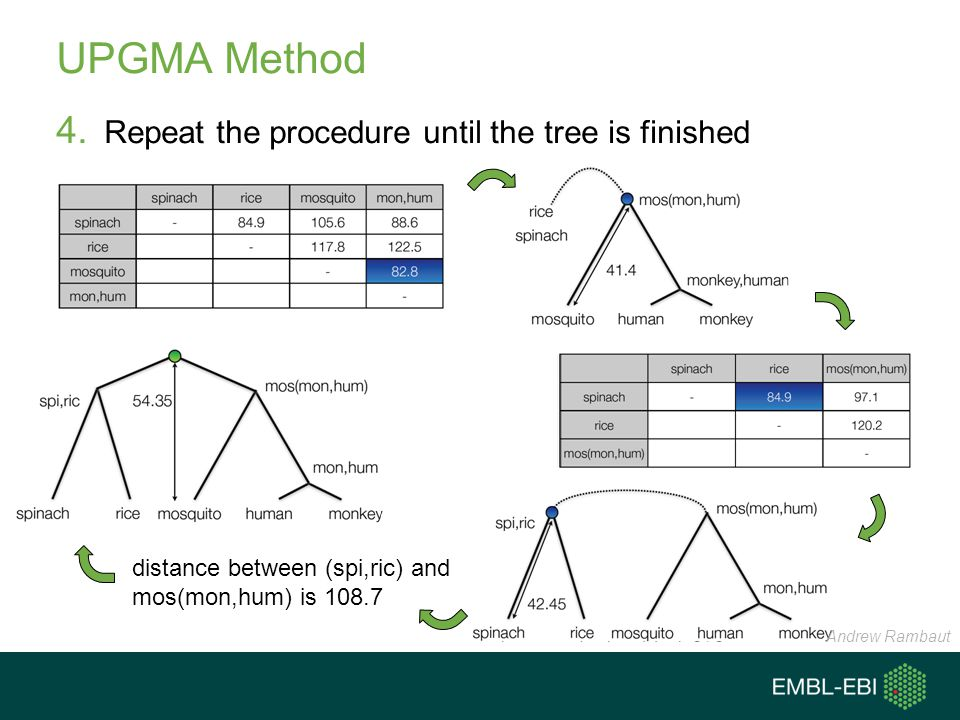UPGMA Method 4. Repeat the procedure until the tree is finished distance between (spi,ric) and mos(mon,hum) is 108.7 Andrew Rambaut