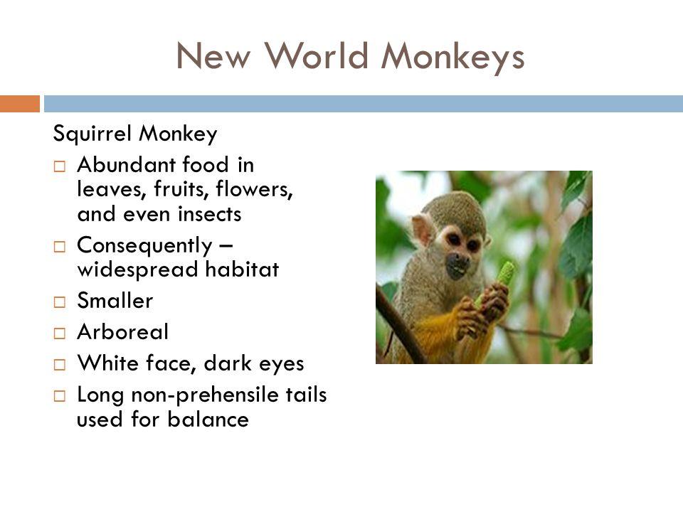 New World Monkeys Howler Monkey  Loudest calls among primates (i.e.
