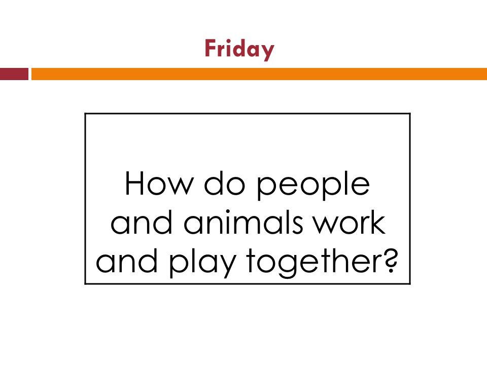 Friday How do people and animals work and play together