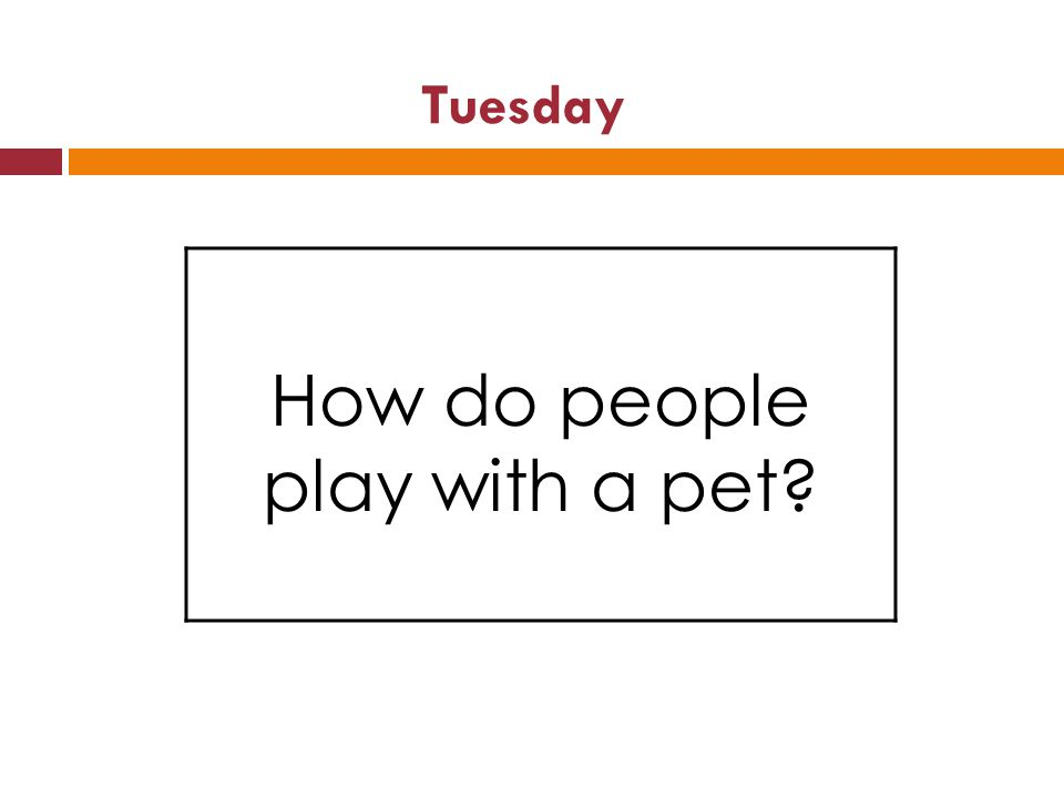 Tuesday How do people play with a pet