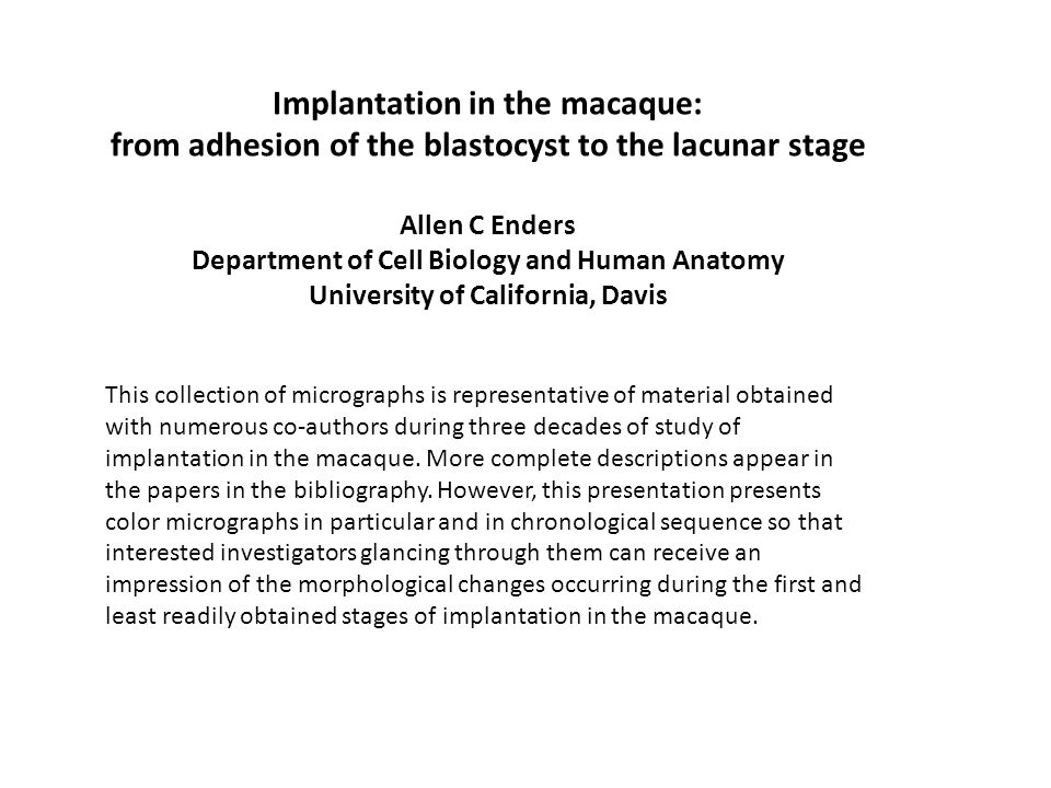 Implantation in the macaque: from adhesion of the blastocyst to the lacunar stage Allen C Enders Department of Cell Biology and Human Anatomy Universi