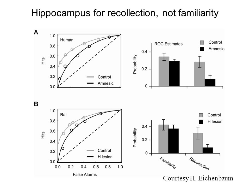Hippocampus for recollection, not familiarity Courtesy H. Eichenbaum