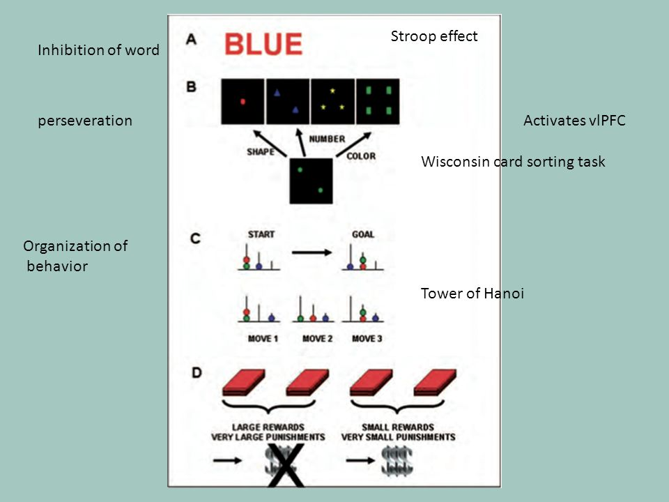 Inhibition of word perseveration Organization of behavior Activates vlPFC Stroop effect Wisconsin card sorting task Tower of Hanoi