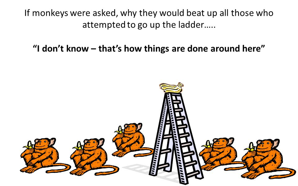 What was left was a group of 5 monkeys who got used to beating up any monkey who attempted to climb the ladder, even though they were not punished wit