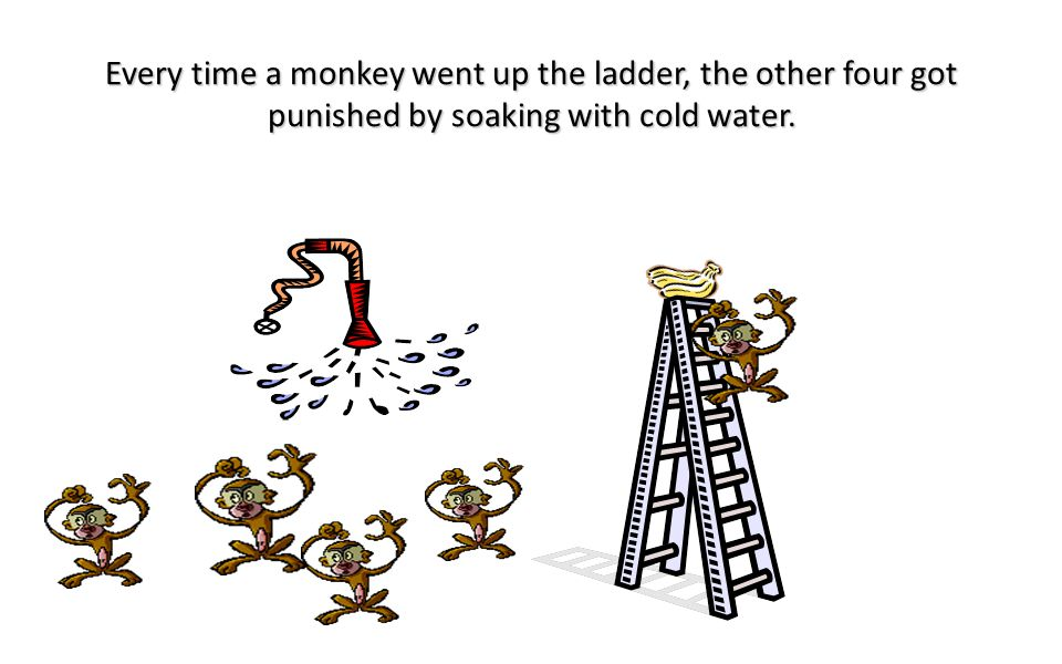 5 monkeys were placed in a cage with bananas on the top of a ladder in the middle of the cage