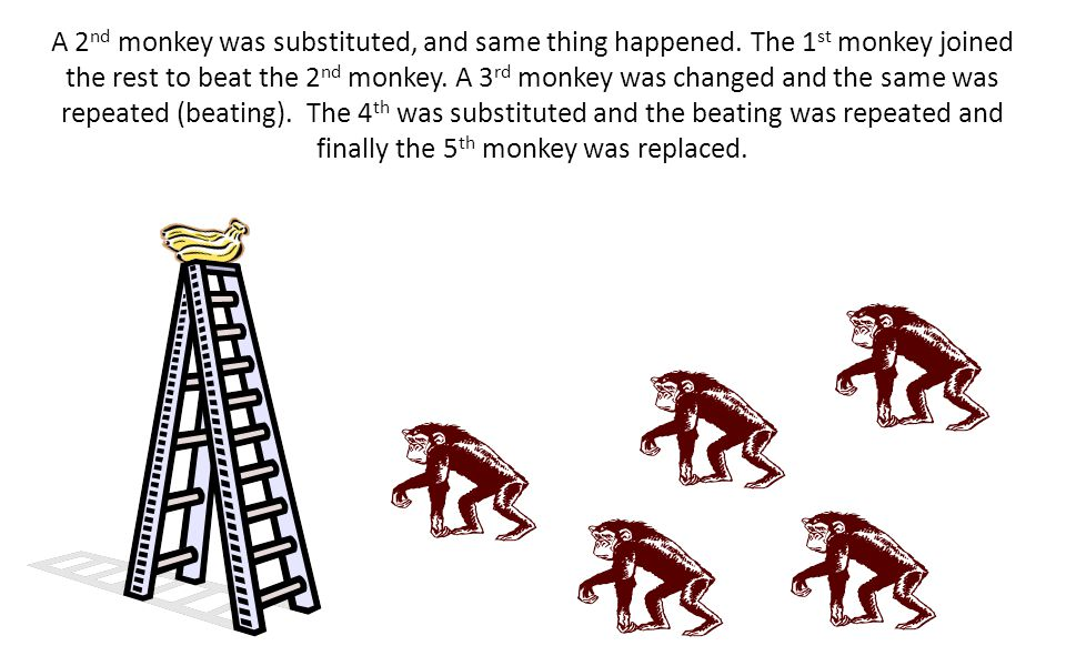 One of the monkeys was substituted. The 1 st thing this new monkey did was to go up the ladder. Immediately the other monkeys beat him up. After sever