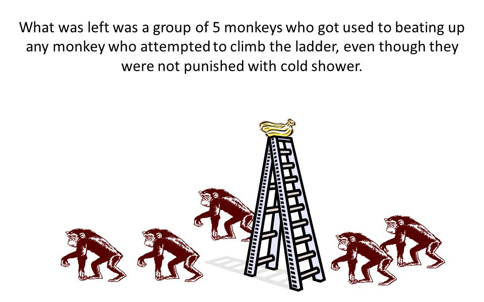 A 2 nd monkey was substituted, and same thing happened. The 1 st monkey joined the rest to beat the 2 nd monkey. A 3 rd monkey was changed and the sam