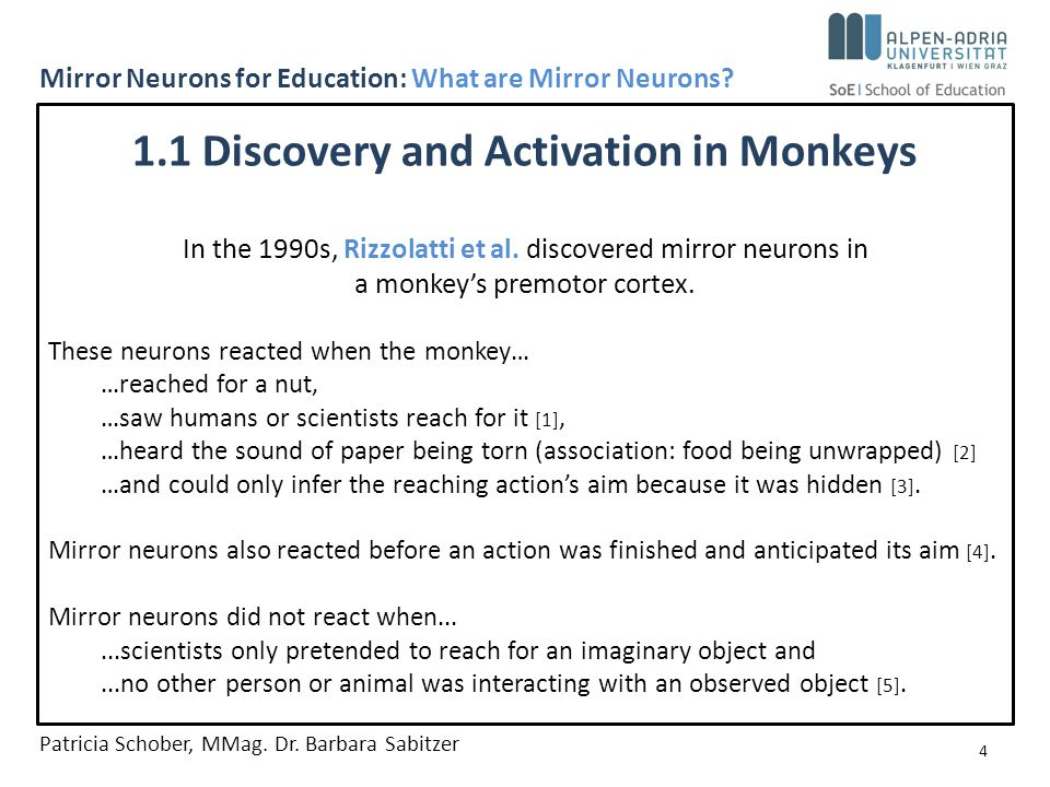 In the 1990s, Rizzolatti et al. discovered mirror neurons in a monkey's premotor cortex.