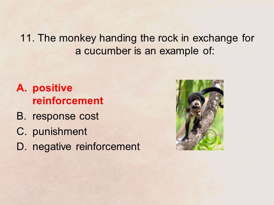 11. The monkey handing the rock in exchange for a cucumber is an example of: A.positive reinforcement B.response cost C.punishment D.negative reinforc
