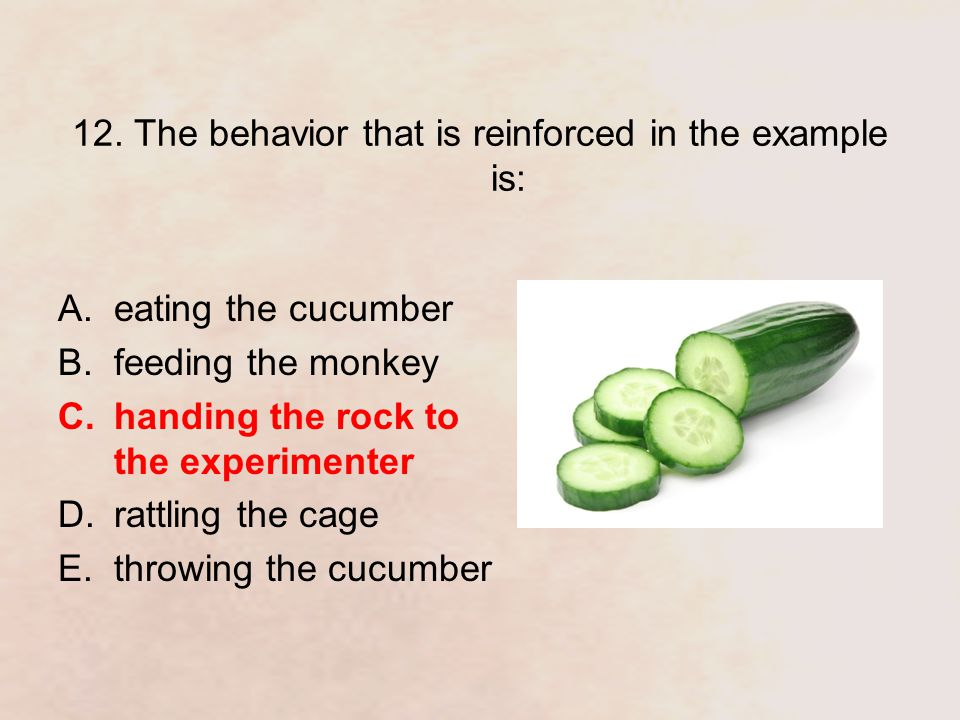 12. The behavior that is reinforced in the example is: A.eating the cucumber B.feeding the monkey C.handing the rock to the experimenter D.rattling th