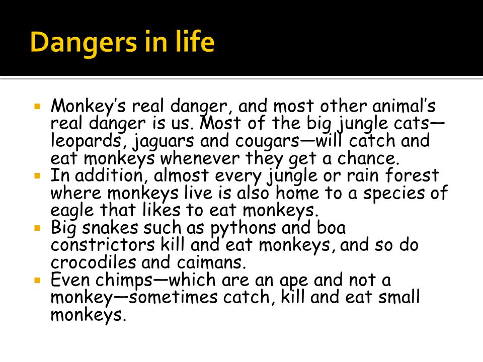  Monkey's real danger, and most other animal's real danger is us.