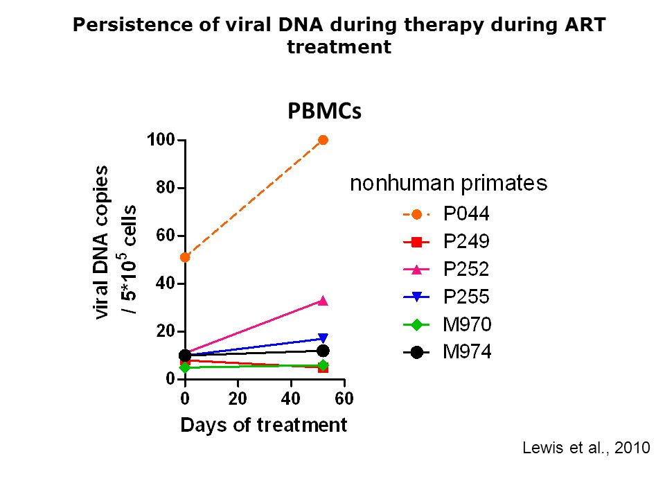 Persistence of viral DNA during therapy during ART treatment PBMCs Lewis et al., 2010