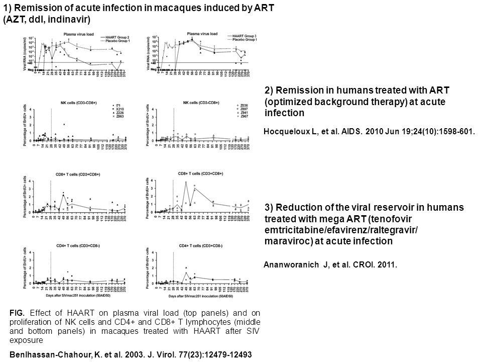 Benlhassan-Chahour, K. et al. 2003. J. Virol. 77(23):12479-12493 FIG.