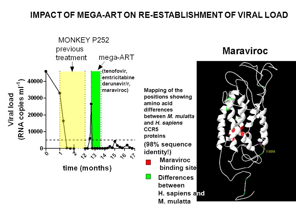 IMPACT OF MEGA-ART ON RE-ESTABLISHMENT OF VIRAL LOAD MONKEY P252 (tenofovir, emtricitabine darunavir/r, maraviroc) (98% sequence identity!) Maraviroc binding site Differences between H.