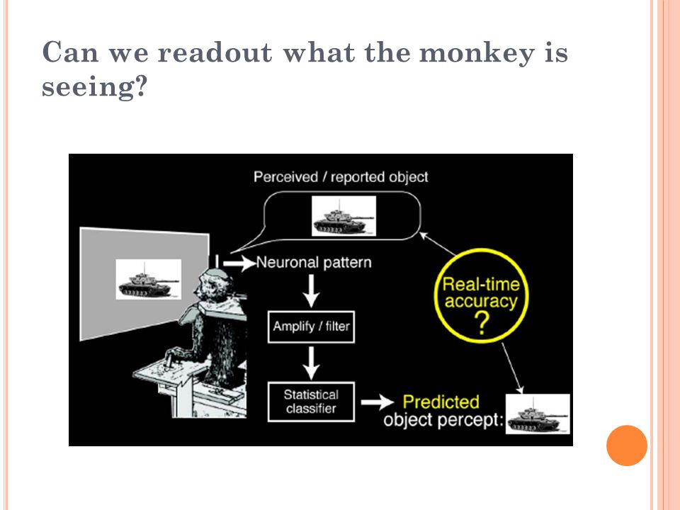 Can we readout what the monkey is seeing