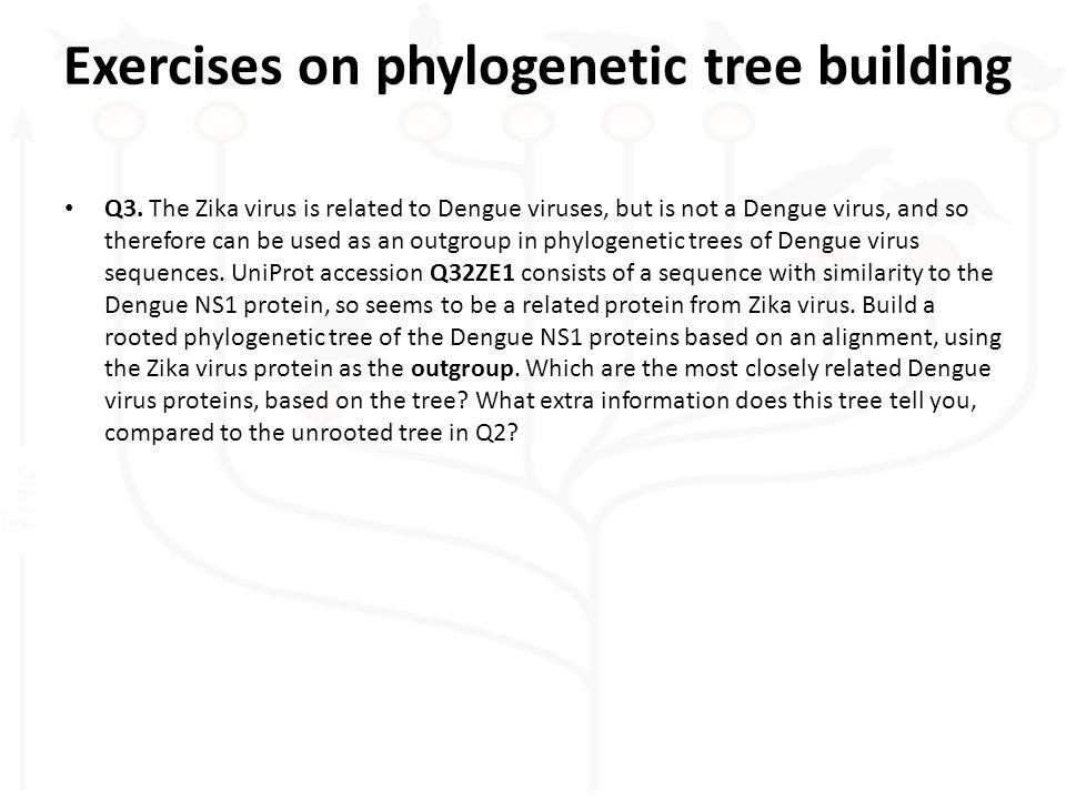 Q3. The Zika virus is related to Dengue viruses, but is not a Dengue virus, and so therefore can be used as an outgroup in phylogenetic trees of Dengu