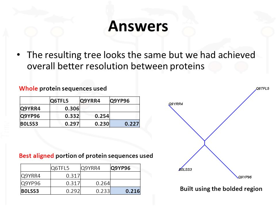 Answers The resulting tree looks the same but we had achieved overall better resolution between proteins Q6TFL5Q9YRR4Q9YP96 Q9YRR40.317 Q9YP960.3170.264 B0LSS30.2920.2330.216 Built using the bolded region Whole protein sequences used Best aligned portion of protein sequences used Q6TFL5Q9YRR4Q9YP96 Q9YRR40.306 Q9YP960.3320.254 B0LSS30.2970.2300.227