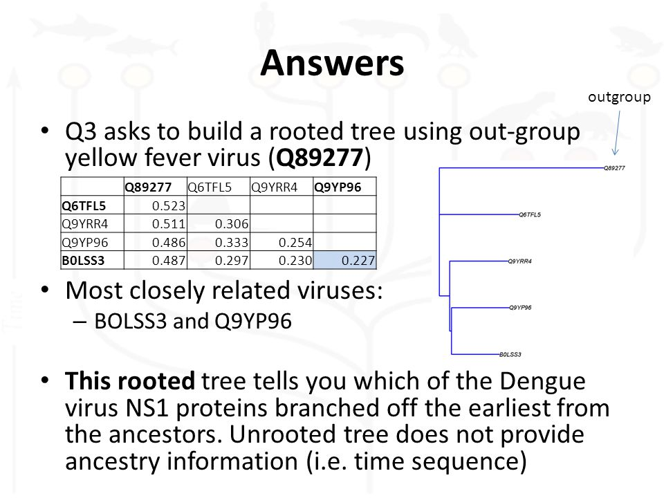 Answers Q3 asks to build a rooted tree using out-group yellow fever virus (Q89277) Most closely related viruses: – BOLSS3 and Q9YP96 This rooted tree tells you which of the Dengue virus NS1 proteins branched off the earliest from the ancestors.