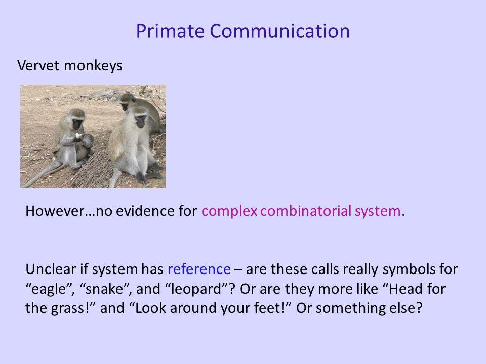Primate Communication Vervet monkeys Male (KN) Female (LB) Vervet 'Snake' Alarm Call
