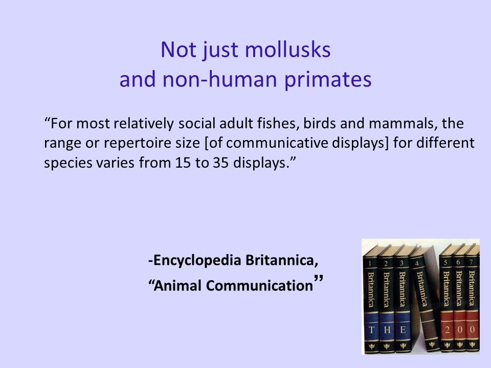 After 450 million years… Cephelopods: 15-35 distinct displays Non-human primates: 15-35 distinct displays http://www.thecephalopodpage.org/cephschool/