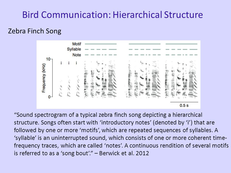 Bird Communication Sparrow Song song call student teacher Song is highly structured (combinatorial system) - notes, syllables, phrases