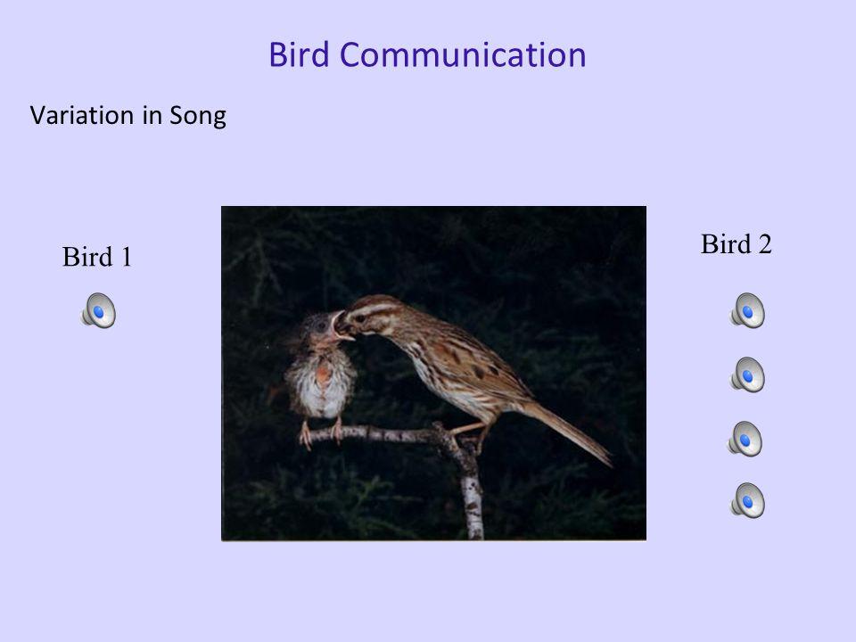 White-crown sparrow song White-crown sparrow #1 in isolation White-crown sparrow #2 w/ tutor White-crown sparrow's tutor