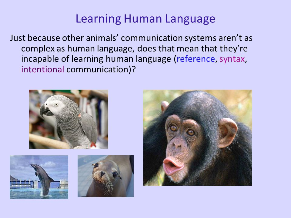 Bird Communication vs Human Language However, there are also some crucial differences (see Berwick et al. 2012 for a more thorough discussion of this)