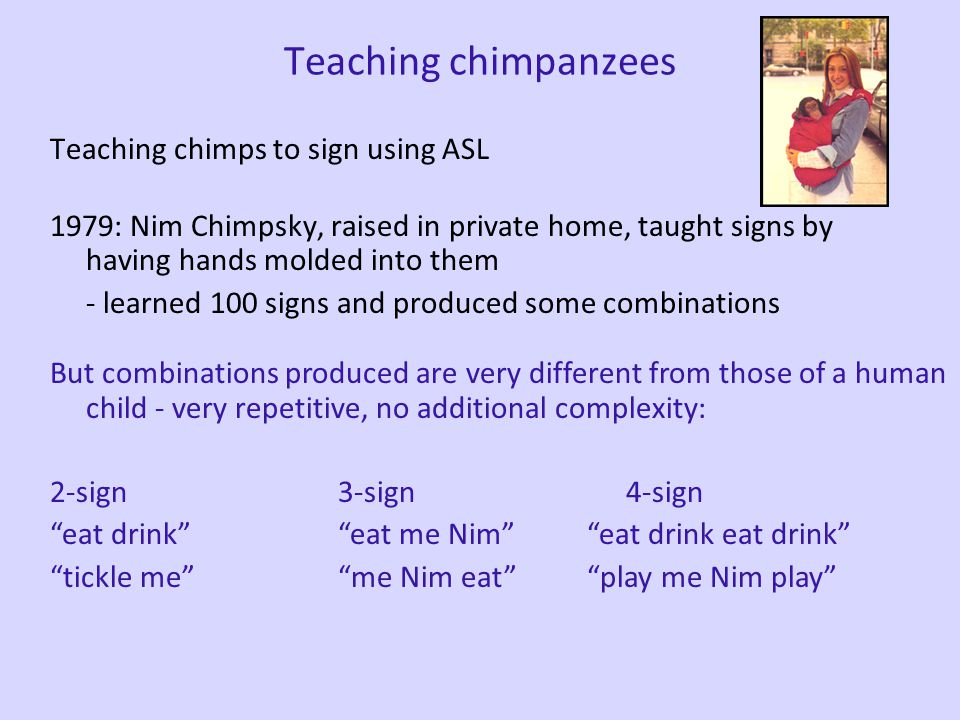 Teaching chimpanzees Teaching chimps to sign using ASL 1960s: Washoe, lived in trailer in backyard, people always communicated via ASL, taught by mold
