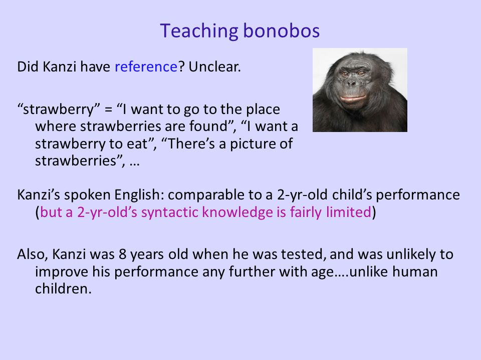 Teaching bonobos Bonobos (pygmy chimpanzees) vocalize in communication more frequently than common chimps do. 1981: adult bonobo Matata instructed wit