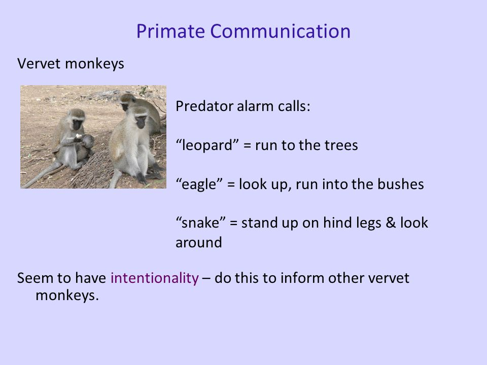 "Human Language vs. ""Animal Language"" Is the difference between an animal communication system and human language just a matter of degree (a quantitati"