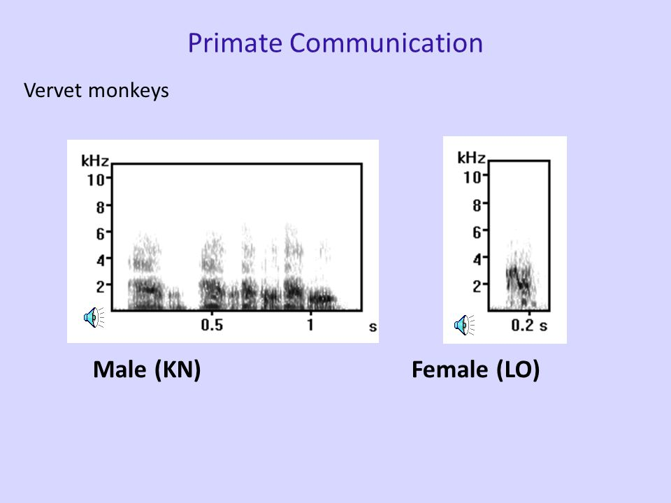 Primate Communication Vervet monkeys Male (KN)Female (LO)