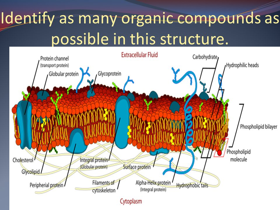 Identify as many organic compounds as possible in this structure.