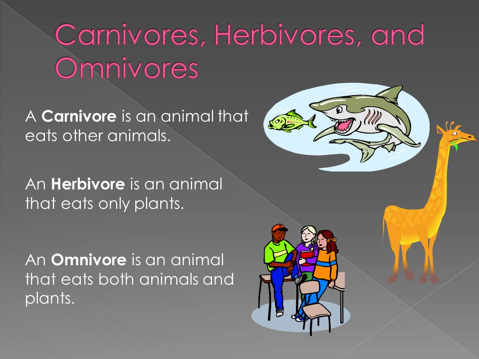 An Omnivore is an animal that eats both animals and plants. An Herbivore is an animal that eats only plants. A Carnivore is an animal that eats other