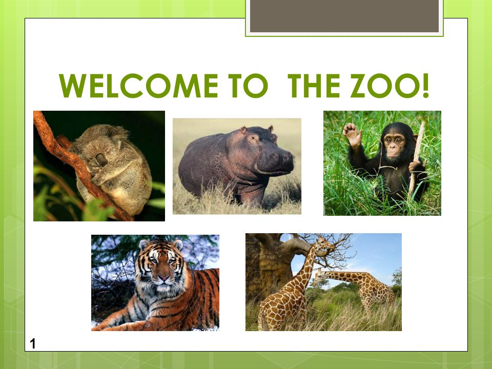 WELCOME TO THE ZOO! 1