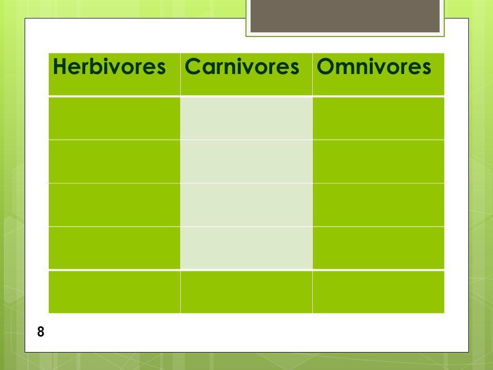 HerbivoresCarnivoresOmnivores 8