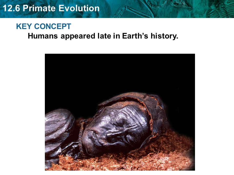 12.6 Primate Evolution KEY CONCEPT Humans appeared late in Earth's history.