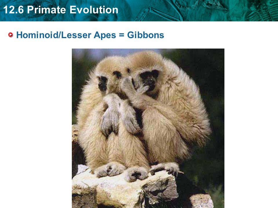 12.6 Primate Evolution Hominoid/Lesser Apes = Gibbons