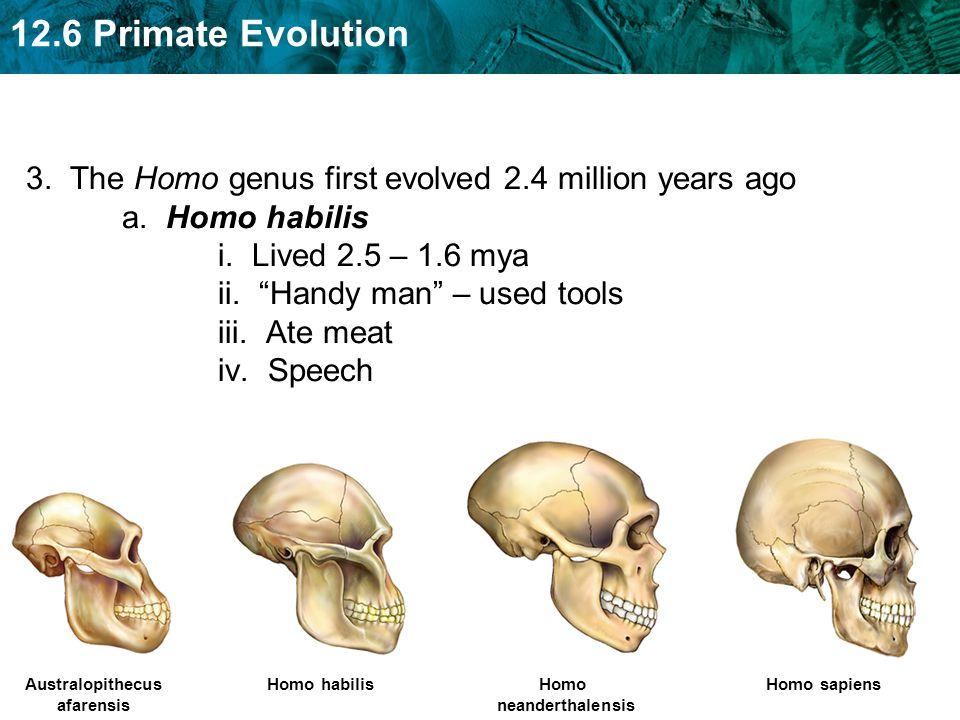 "3. The Homo genus first evolved 2.4 million years ago a. Homo habilis i. Lived 2.5 – 1.6 mya ii. ""Handy man"" – used tools iii. Ate meat iv. Speech Aus"